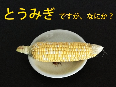20160910_とうみぎ