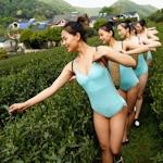 中国・杭州の茶畑でセクシーレオタード美女軍団が茶摘