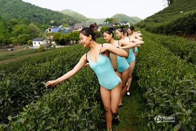 中国・杭州 レオタード美女軍団茶摘 7