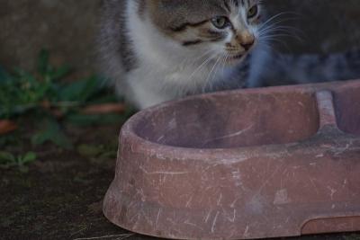 古民家の猫たち2