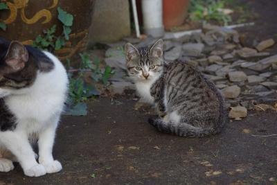 古民家の猫たち4