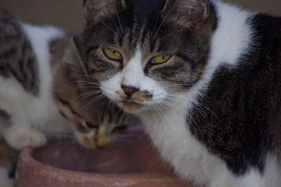 古民家の猫たち5