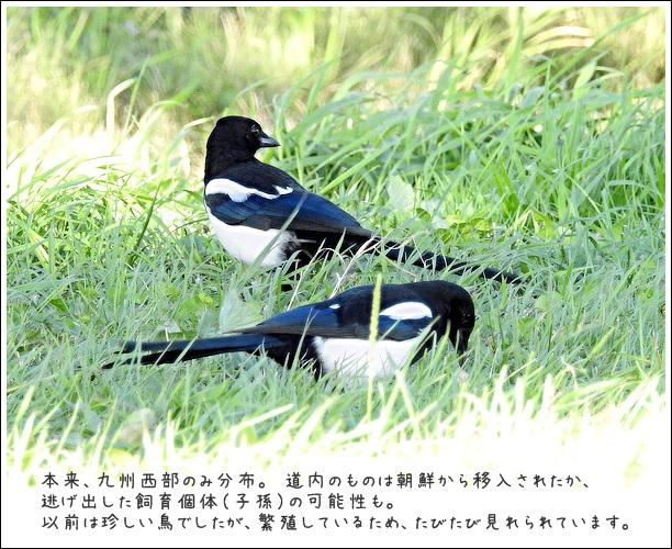 20161012kasasagi1.jpg
