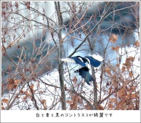 20161012kasasagi3.jpg