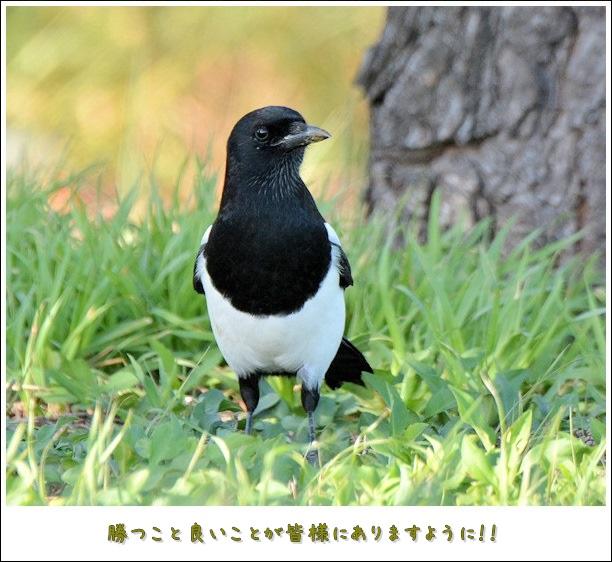 20161012kasasagi5.jpg