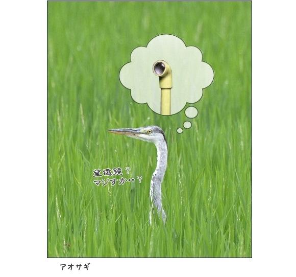 2016911aosagi2.jpg