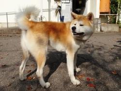 センター募集の犬