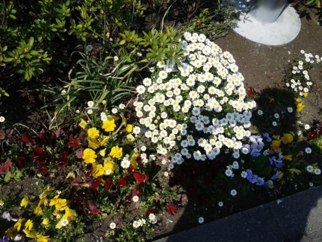 四月十二日お花