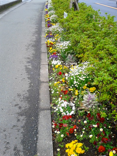 四月十四日お花