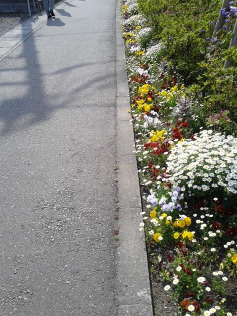 四月二十日お花