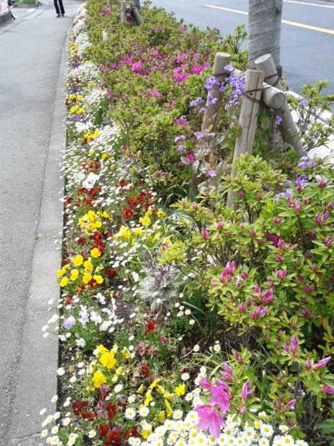 四月二十三日お花