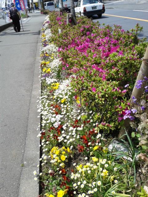 四月二十七日お花