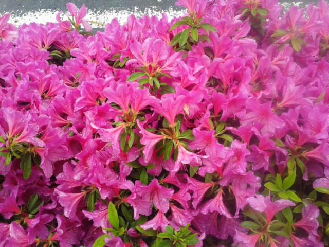 四月二十八日お花