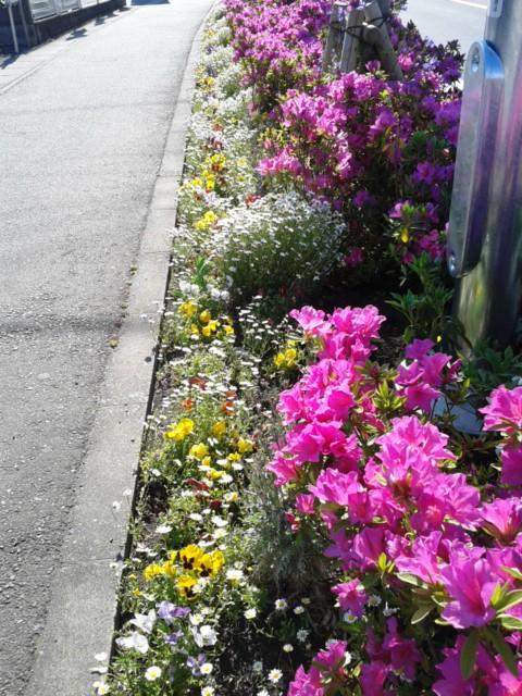 四月三十日お花