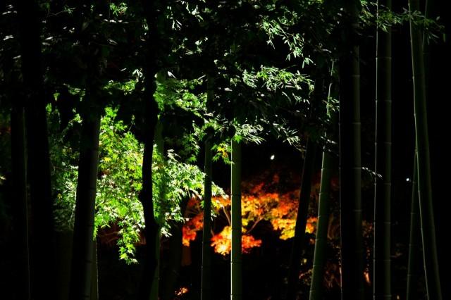 竹やぶ焼けた