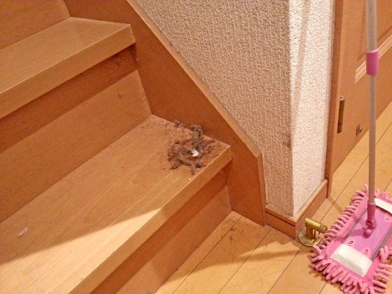 階段そうじ