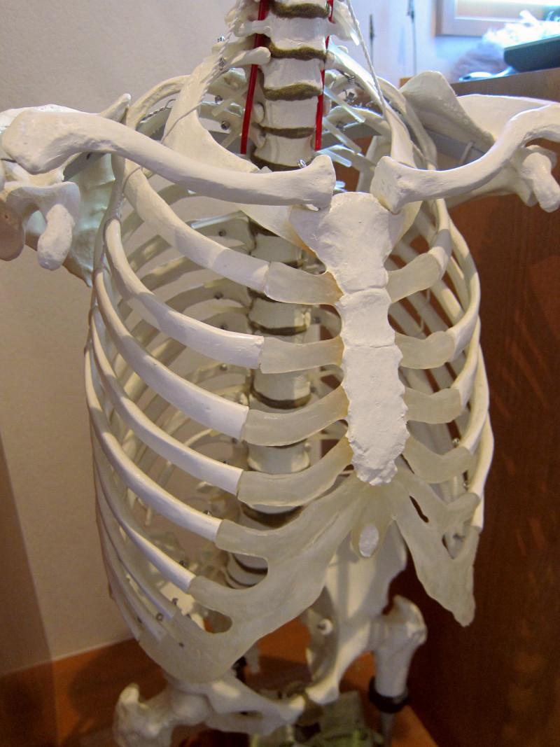 bone1