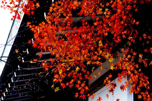 IMG_1486-2.jpg