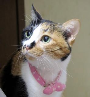151124_cat02.jpg