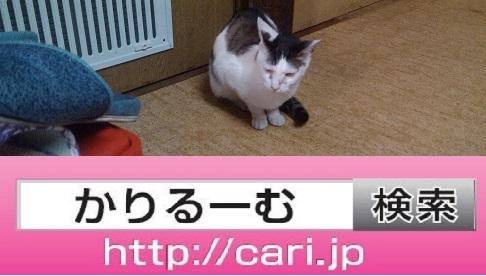 moblog_4c4a6567.jpg