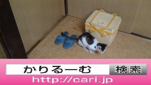 moblog_96192cfb.jpg