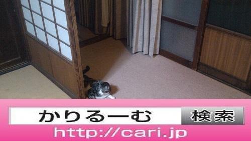 moblog_b0968c70.jpg