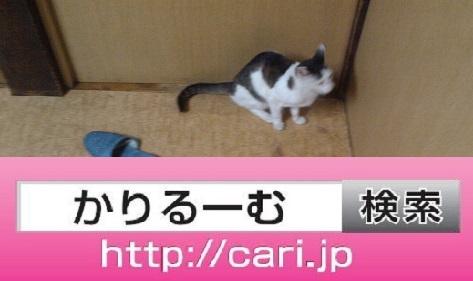 moblog_d29327ea.jpg