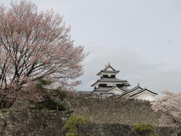 kominejyo-sakura1-web600.jpg