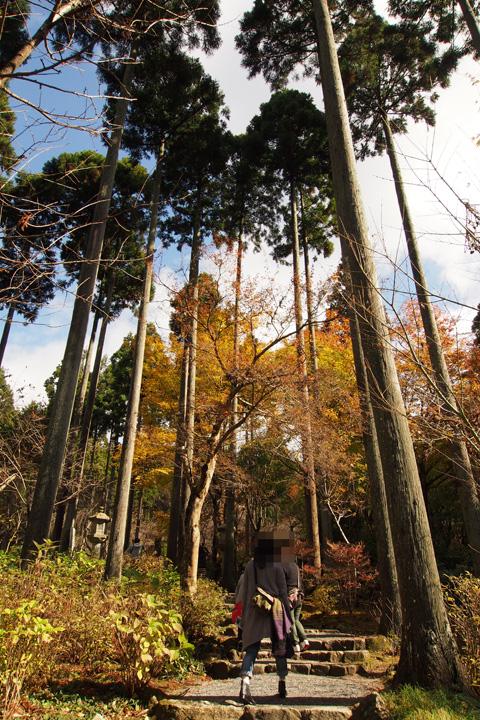 20151115_sanzenin_temple-04.jpg