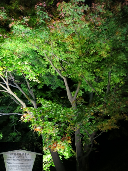 紅葉標準木02