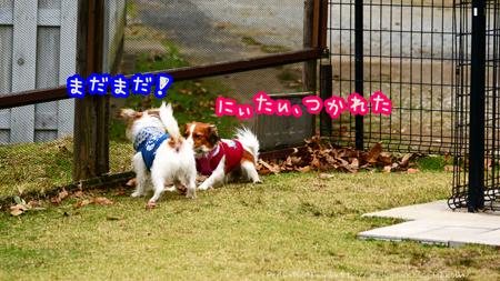 151204_yuasa11.jpg