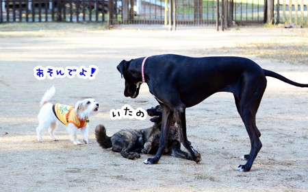 151207_yuasa9.jpg