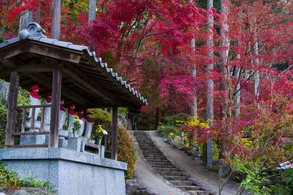 20151122崇禅寺紅葉の画像