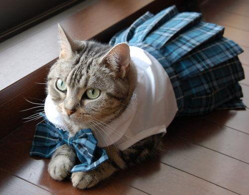 猫セーラー