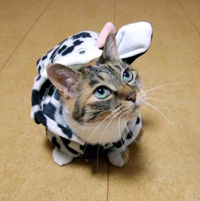 コスプレ牛猫