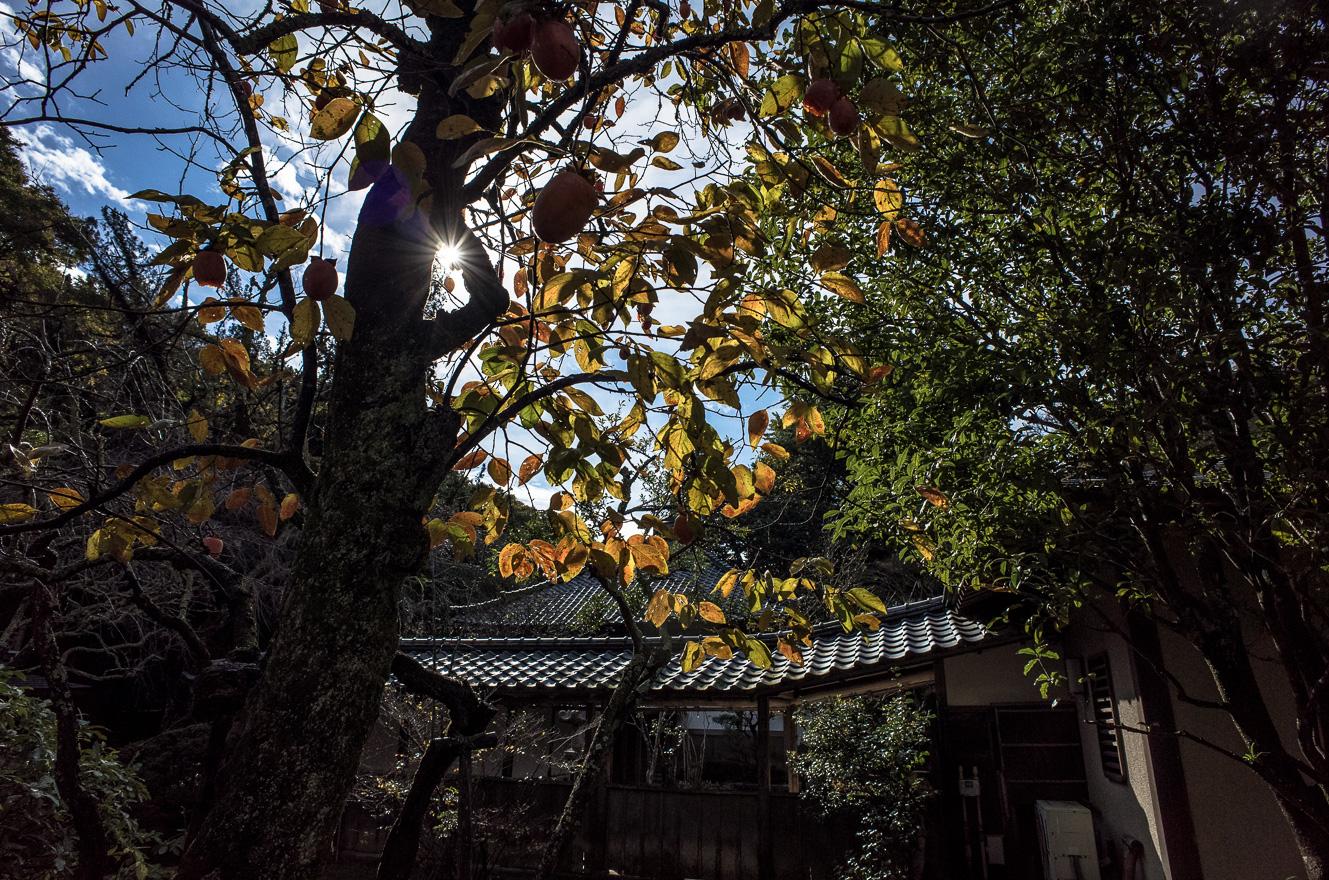 151126浄智寺 (2 - 1)-4