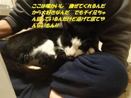 PC010179_convert_20151203101944.jpg