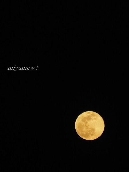 お月さま♪