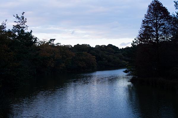 夕暮れ池風景