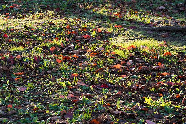 落ち葉と西日