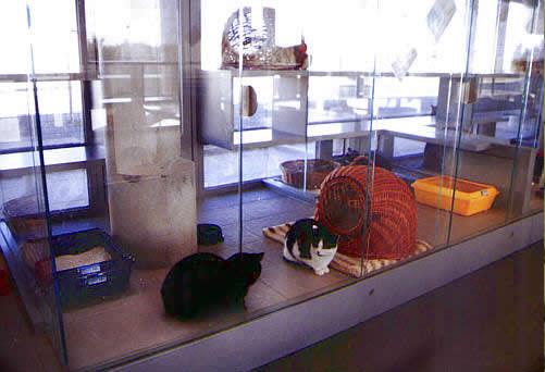 動物保護施設 ティアハイム・ベルリン3