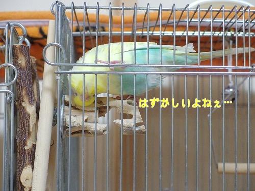 s-IMGP0746.jpg