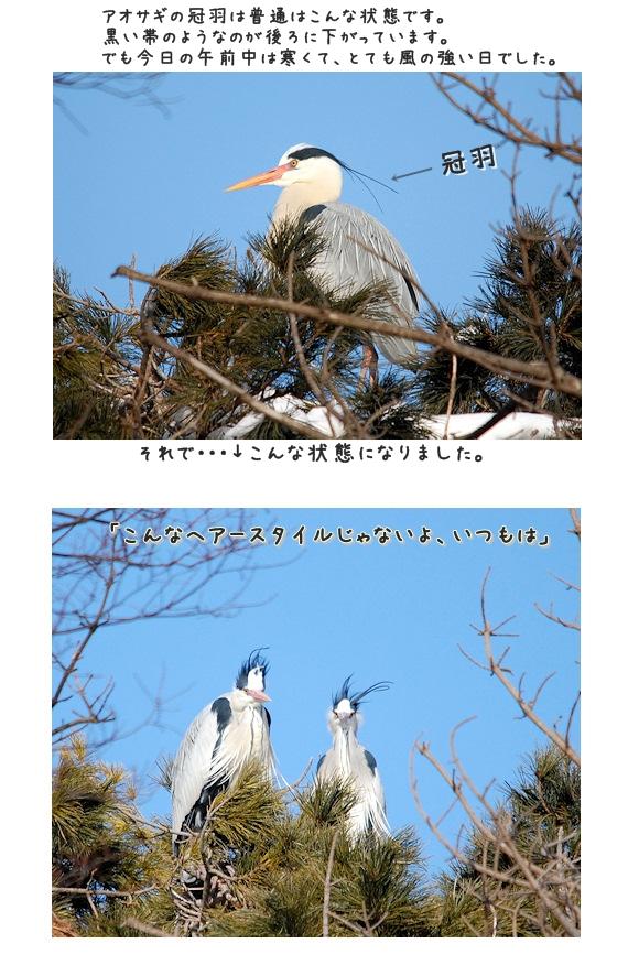 2016916aosagi1.jpg