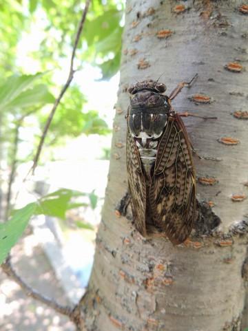 昆虫は、死ぬと何故あお向けになる?