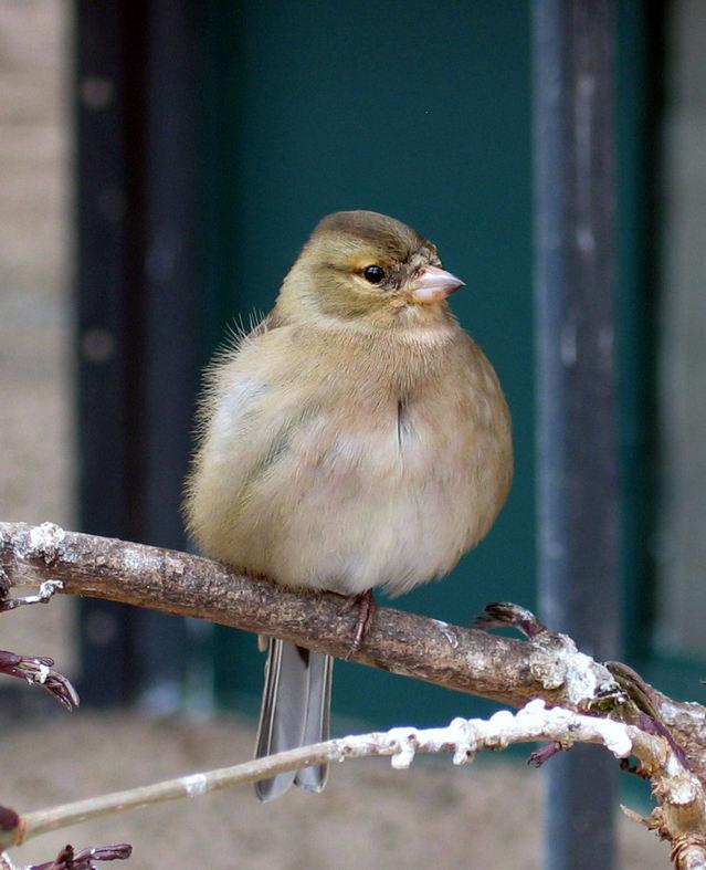 鳥は、何故電線や枝にとまったまま、眠ることができる?