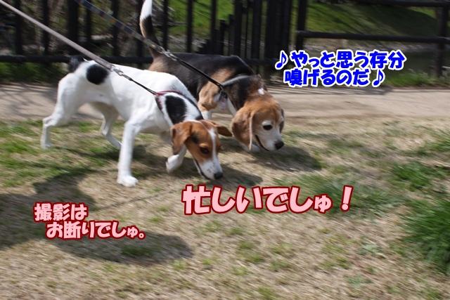 IMG_8785.jpg