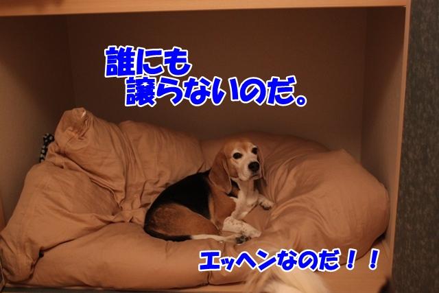 IMG_9387.jpg